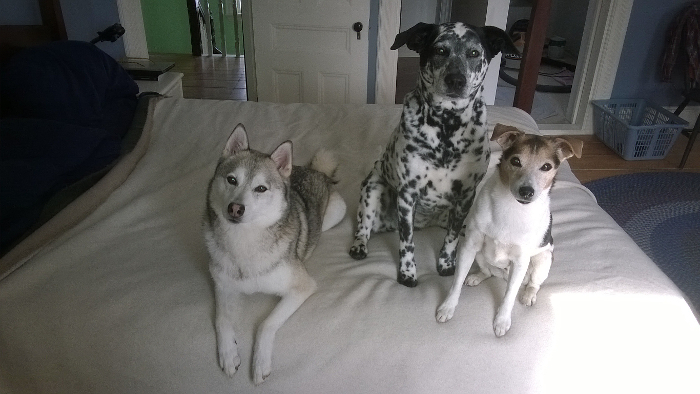 Nanook, Molly and Joey